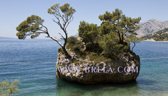 Brela symbol - stone with pinetree in the sea
